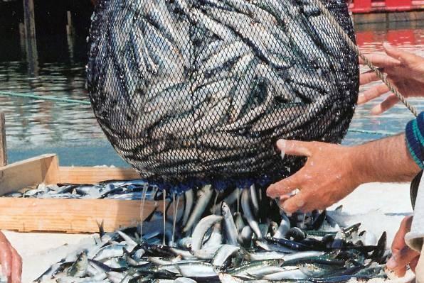 Kakav je to spoj sa ženom riba